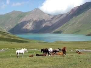 180_ky_horses_lake.jpg